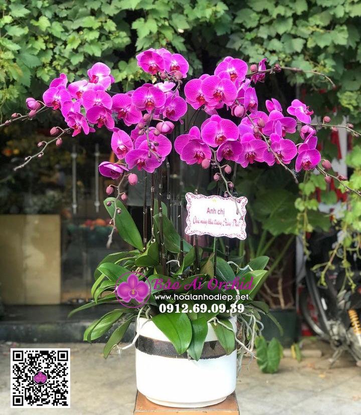 [TỔNG HỢP] Những mẫu hoa lan hồ điệp biếu tết 2021 Siêu đẹp