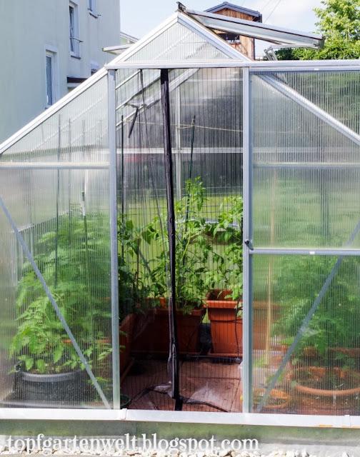 Insektenschutztüre für Gewächshaus | Schutz vor Gemüseeule - Gartenblog Topfgartenwelt