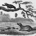Crow  and fox Hunting  kids stories.online