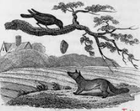 Crow  & fox Hunting