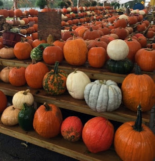 The Best Pumpkin Patches Near Chester County