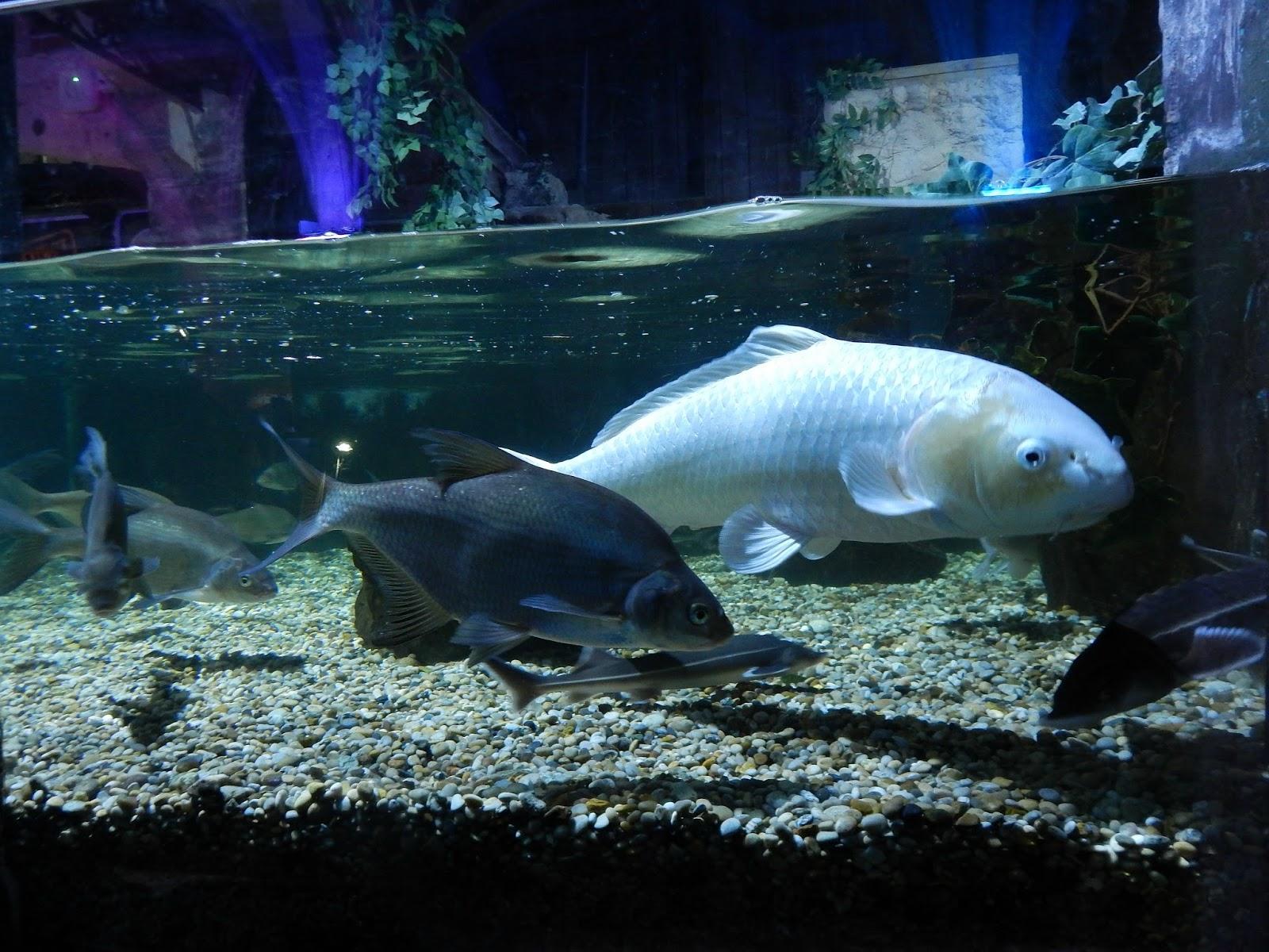 Akvárium Sea Life v Brightonu