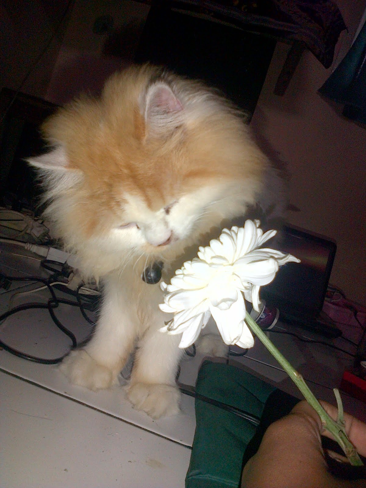 Fakta Ilmiah Mengapa Rasulullah Memelihara Kucing Haedar Alwi Assegaf