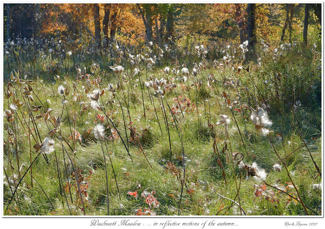 Wachusett Meadow: ... in reflective motions of the autumn...