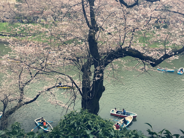 Spring time in Tokyo!