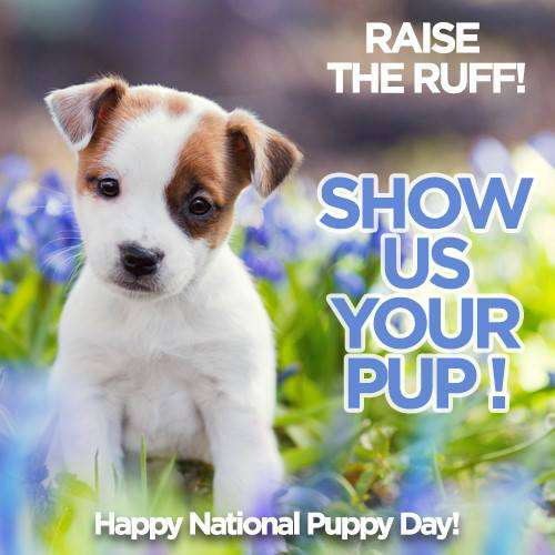 National Puppy Day Wishes Sweet Images