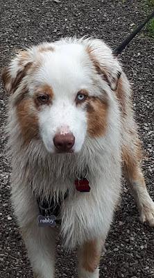 eduquer chien agility annecy faverges ugine thones albertville