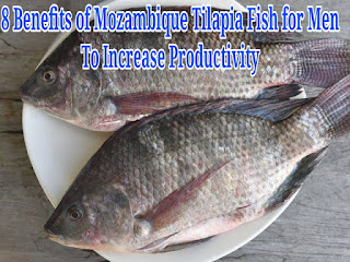 8 Benefits of Mozambique Tilapia Fish for Men to Increase Productivity