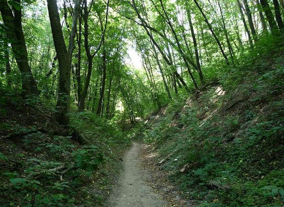 Территория Голосеевского национального парка возле Свято-Троицкого монастыря