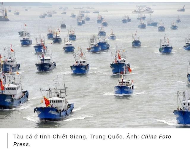 Trung Quốc lại ngang nhiên cấm đánh bắt cá trên Biển Đông, Việt Nam không làm gì được?