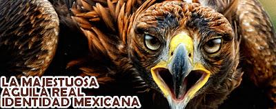 Datos históricos Águila real