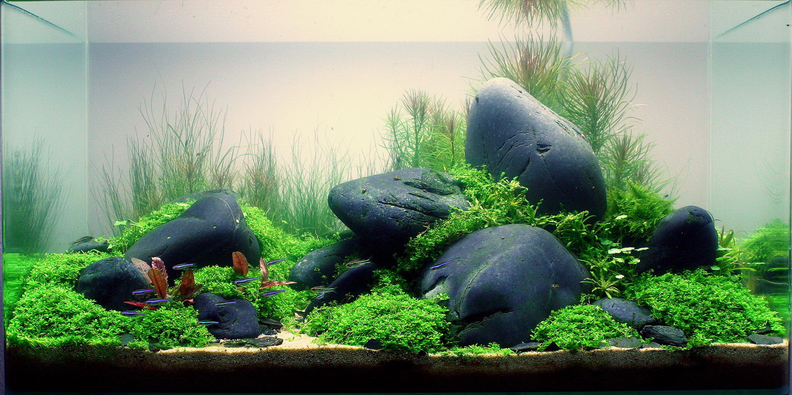 Tips Memelihara Ikan Hias Lovedfish