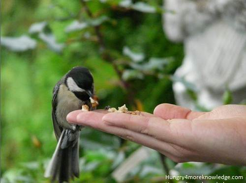 Give-Food-For-Birds