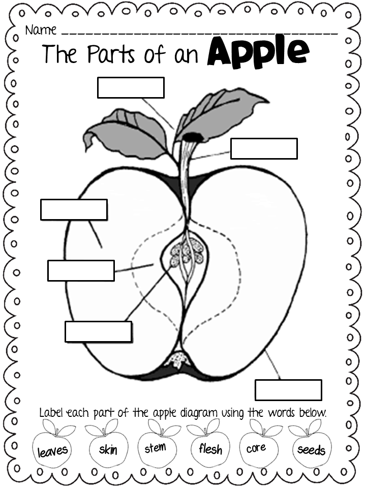 Apple Diagram For Kindergarten, Apple, Free Engine Image