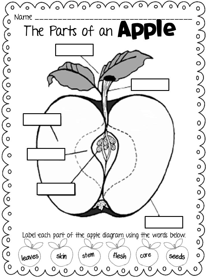 applesauce diagram