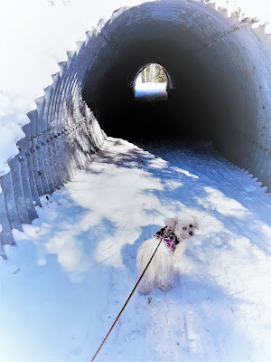 Waterville Valley resort in New Hampshire. Tunnel along a cross country ski trail that allows dogs!