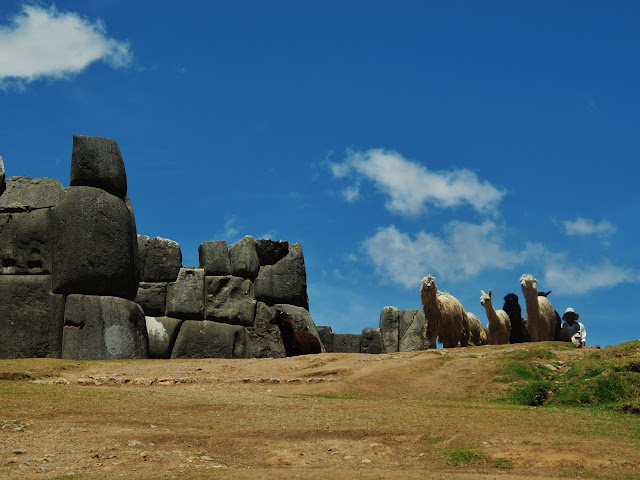 Lhamas nas ruínas do antigo Império Inca, em Cusco no Peru