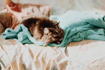 Cat snuggled on a blanket