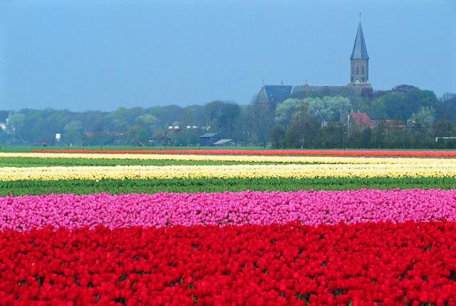Dicas para alugar um carro na Holanda