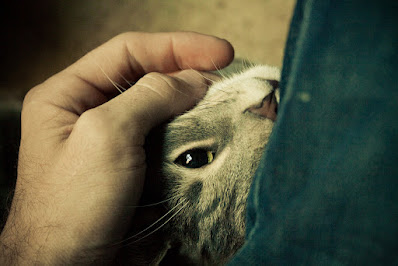 Porqué es mejor reforzar el comportamiento positivo de tu gato