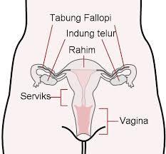 Kenali Sterilisasi Pada Wanita