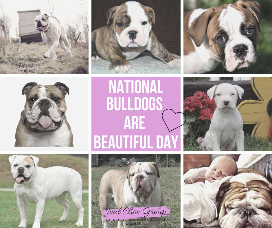 National Bulldogs Are Beautiful Day Wishes Images