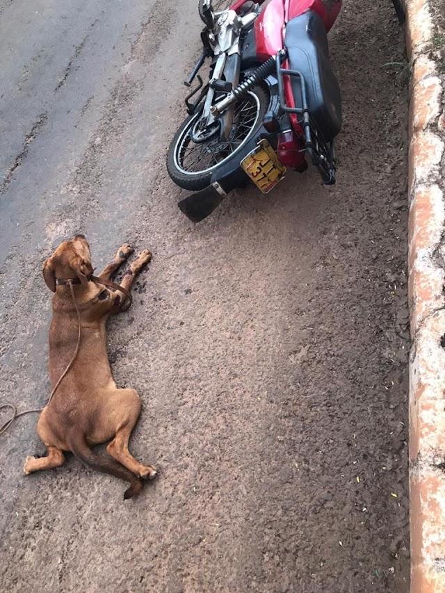 Jataí: Policiais Civis de folga prendem em flagrante idoso arrastando cadela na moto