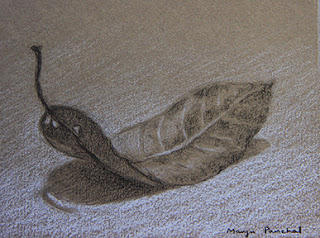 Charcoal and pastel sketching of a leaf on Canson Mi Teintes paper. By Manju Panchal