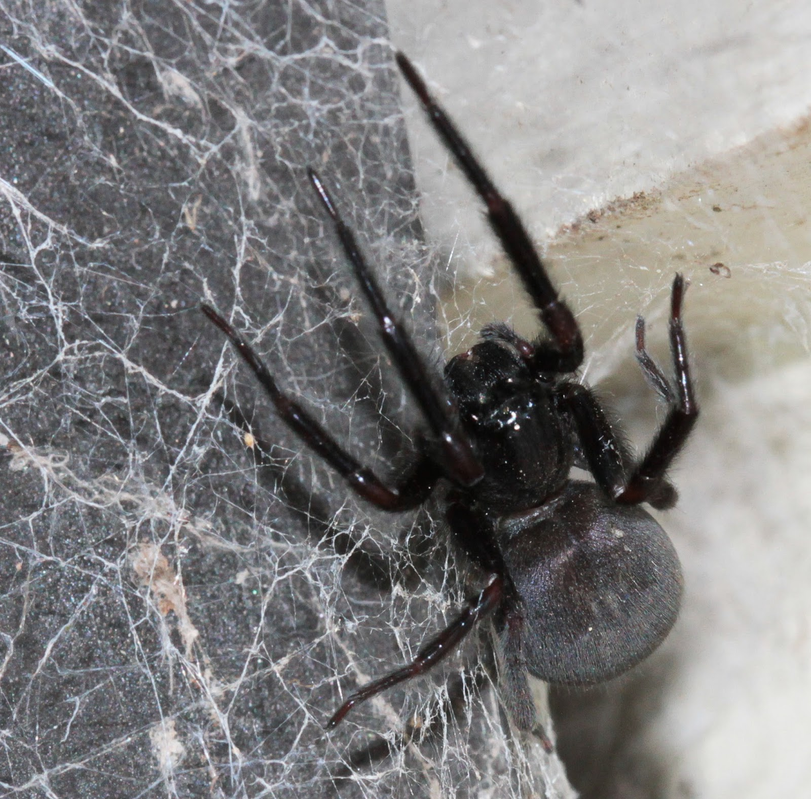 Spider Web Halloween Decorations: The Spiderblogger: I Always Love The Black House Spiders