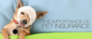 Pet Insurance Comparisons - A Step by Step Guide to Getting the Cheapest Pet Insurance?