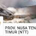 Pendaftaran Pengumuman PPDB Prov NTT 2019/2020