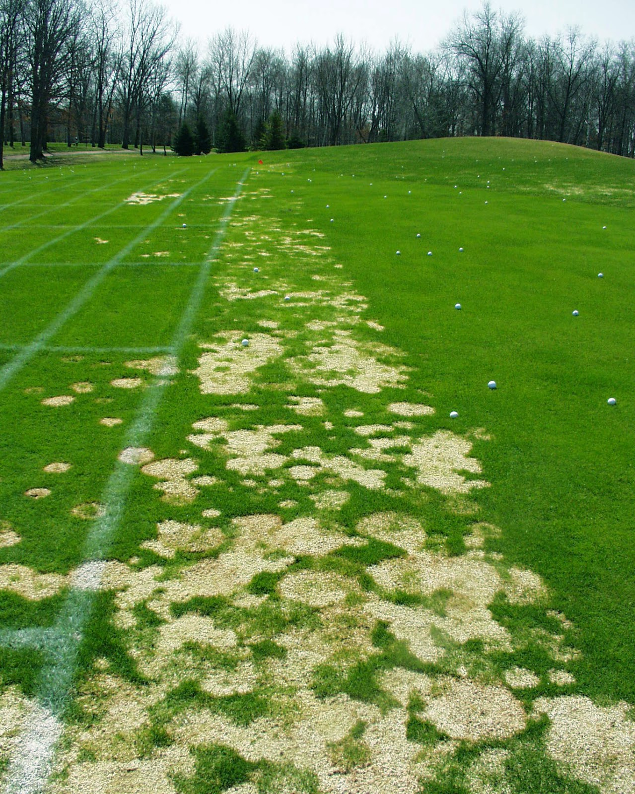 Purdue Turf Tips Snow Molds In The Winter Of 2013 14