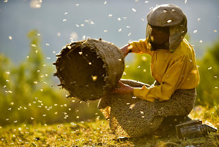 Honeyland, de Tamara Kotevska