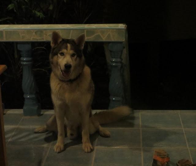 Собака сидит на веранде