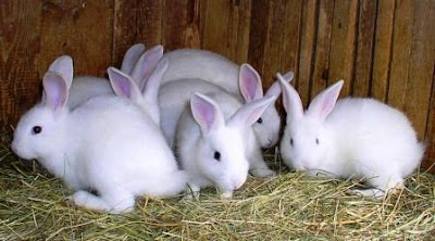 Tips How to Keep and Care Rabbits