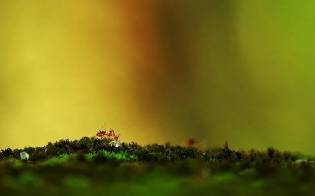 Cara Mengusir Semut yang Mengganggu dengan Mudah