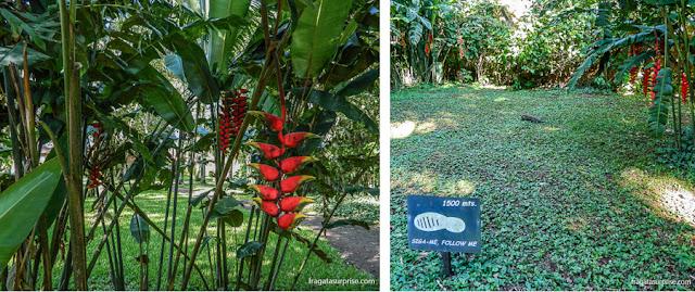 Trilha na área verde do San Martin Hotel & Spa, em Foz do Iguaçu