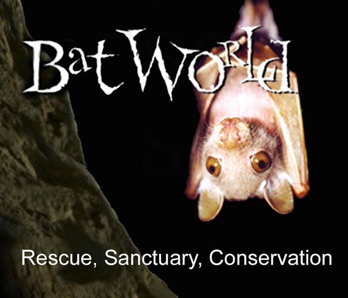 bat world sanctuary amanda lollar