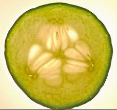 buah mentimun