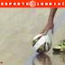 Depois de exclusões, Itupeva define reta final da Série A do futsal