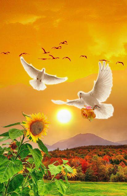 Que a trilha do seu caminhar  seja repleto de saúde, paz e amor.  Deus abençoe seu dia!  Bom Dia!