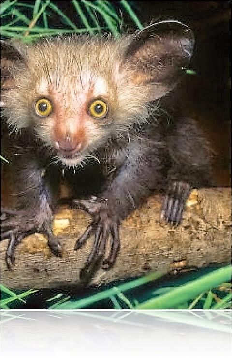 fieggentrio: bizarre, gekke, vreemde en bijzondere dieren.