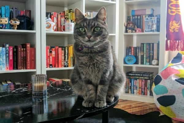 The cat that co-authored a physics paper