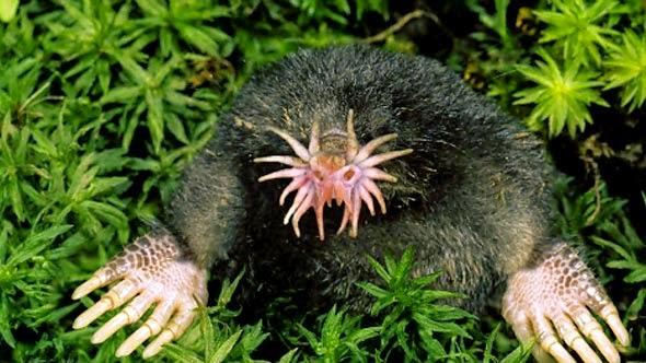 Strange animals on earth