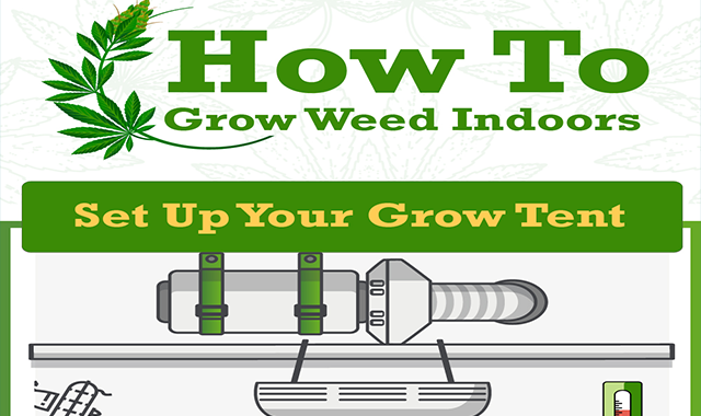 Growing Marijuana Indoors: The Ultimate Guide For Beginner