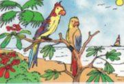 burung bermain di tepi pantai
