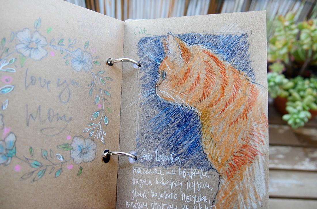 Cats pencil  sketches