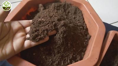 خليط طين و بتموس و بيرلايت و فيرمكلايت للزراعة المنزلية