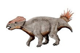 Ajkaceratops Dinozorlar Bilgisi