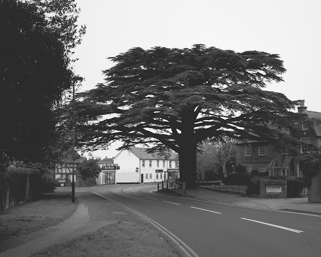 Caterham High street tree